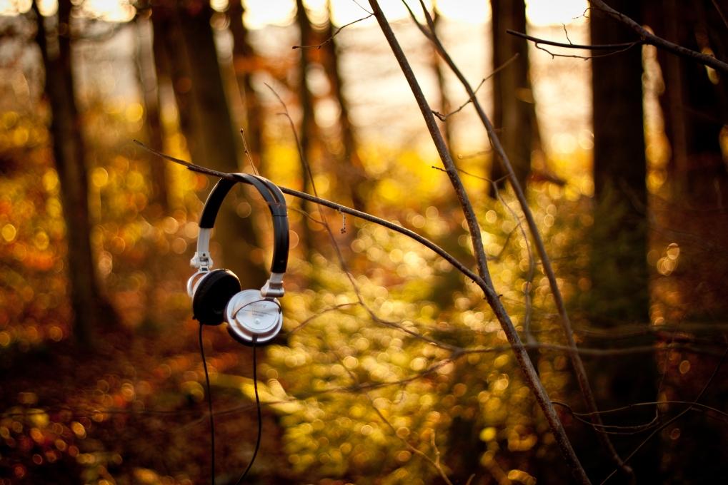 muzica-naturii2